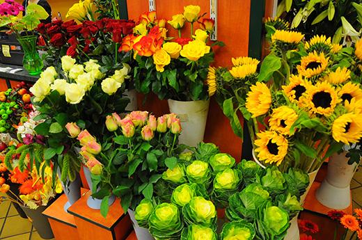 Blumen pflanzen  Blumen Börse Skonitis GmbH - Blumen und Pflanzen
